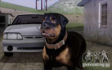Rottweiler from GTA 5 для GTA San Andreas