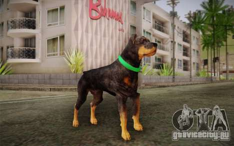 Rottweiler from GTA V для GTA San Andreas