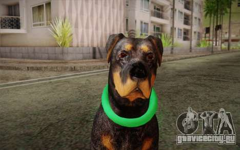Rottweiler from GTA V для GTA San Andreas третий скриншот