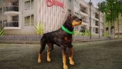 Rottweiler from GTA V