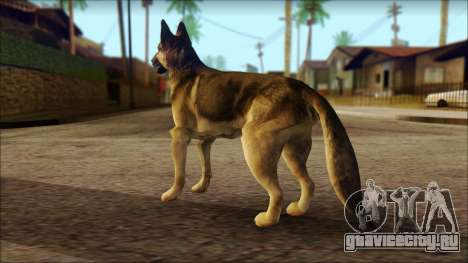 Dog Skin v2 для GTA San Andreas второй скриншот